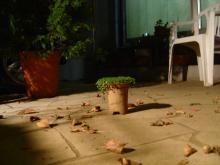 秋風吹く庭!