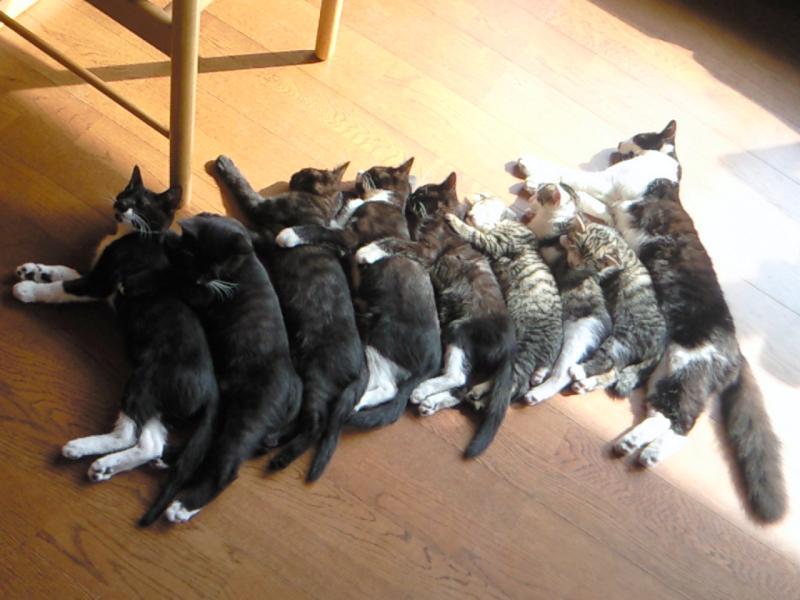 猫 複数飼い