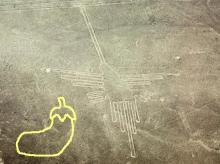 ナス科の地上絵