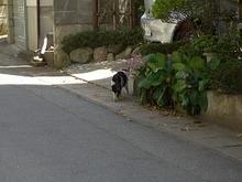 山形の猫さん-2
