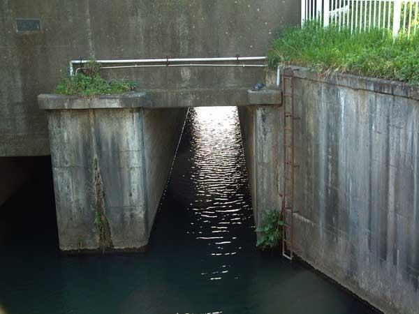 江戸川に注ぐ前の水門