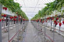 aguri農園