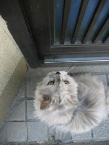 近所の猫ちゃん2