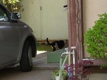 山形の猫さん-3