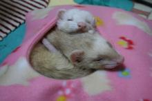まったり~な寝袋②