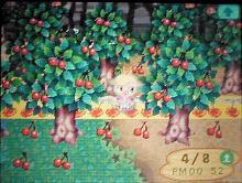 桜祭り06