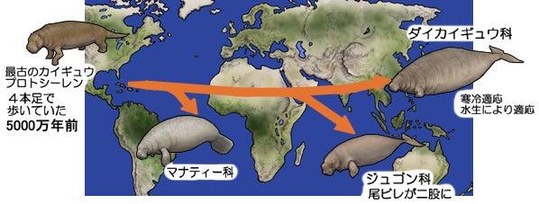 川崎悟司 オフィシャルブログ 古世界の住人 Powered by Ameba-カイギュウ類の歴史