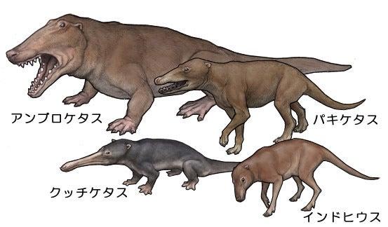 クジラの祖先は陸を歩いていた