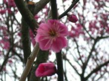 Mrs.Luckyのラッキー・チャ・チャ・チャ!-早く桜も観たいな! 家族そろって(^_-)-☆