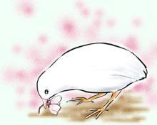 白ちゃんと桜。