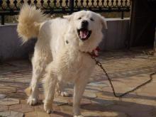 西中島 犬