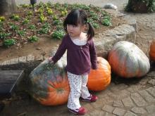 かぼちゃと!