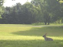 またウサギが