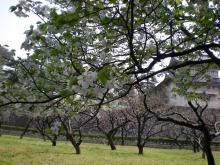 木々たち2