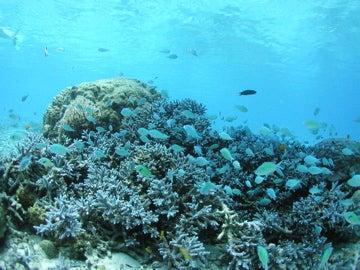 under the sea2