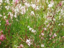 叢の小花たち
