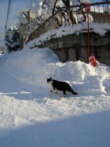 '06-山形雪道5