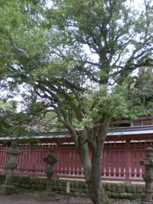 冬を告げる木