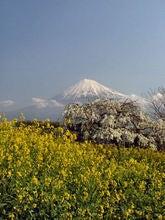 050501岩本山