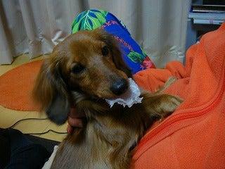 旅犬Laniのほほん風船記-憎き獲物