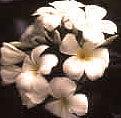 flowersofbali