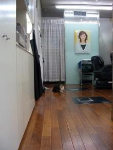 床屋さん猫-2