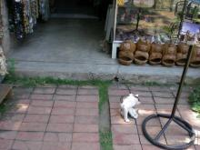 売店の猿と猫