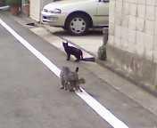 腐ってやがる・・・ぷログ-親猫子猫