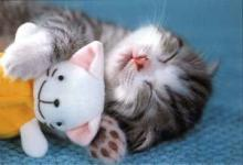 cat_kity[1].jpg