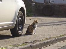 宮城県の猫さん-5
