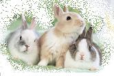 ウサギ.PNG