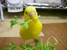 Sanctuary~幸せの黄色い小鳥~