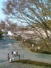 桜in大学