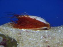 聖亜珊瑚世界6