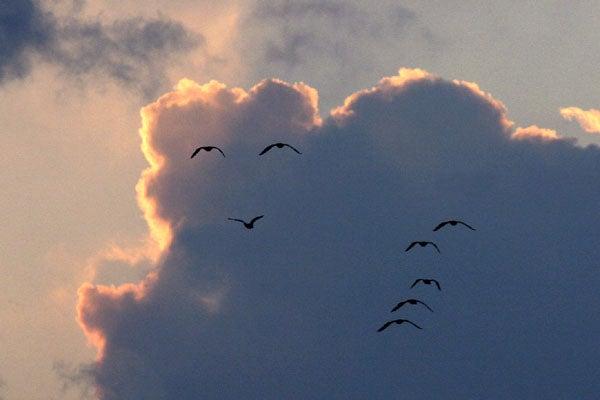 鳥の笑顔mmm
