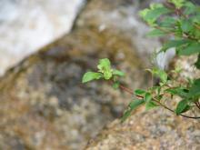 鎧ダム植物