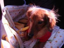 旅犬Laniのほほん風船記-旅犬