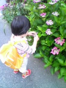 touching flower