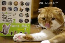 わがや自慢の猫大集合2