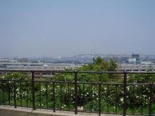 丘から見える港