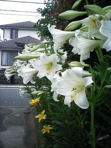2008-06-25_15-21.jpg