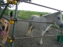 ランで遊ぶよりも、ママはお馬さん めあて(^_-)