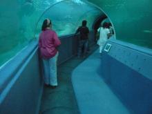 チェンマイ・ランプーン20代で隠居生活-水中トンネル2