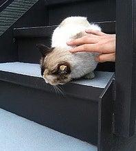 正面を向いて欲しかった猫