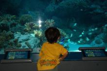 ようやく水族館の中に・・