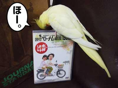 たんぽぽ032807