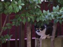 マンション猫