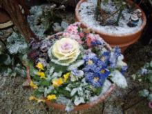 苗に積もる雪