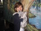 コアラは、やる気ない。