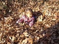 落ち葉の中